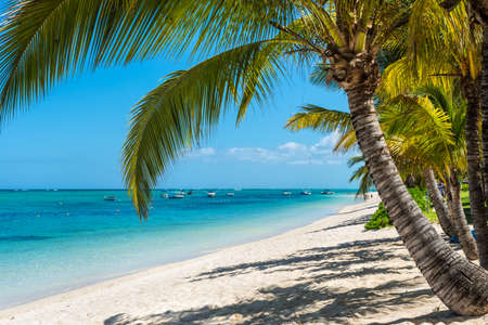Le Morne, Mauritius - December 11, 2015: Amazing white beaches of Mauritius island. Tropical vacation in Le Morne Beach, Mauritius, one of the finest beaches in Mauritius. Palm tree in the foreground.