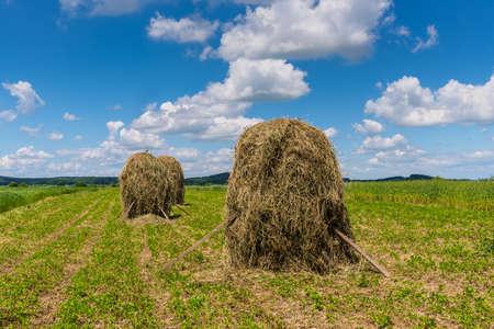 Field with haystacks. Rural landscape. Hey rolls on the field in Ukraine.