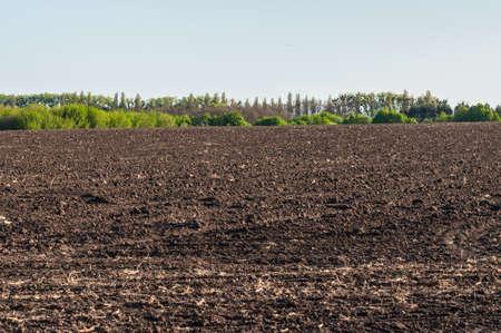 Campo de suelo chernozemic arado (humus) y línea de plantación de árboles en la región de Kiev, Ucrania