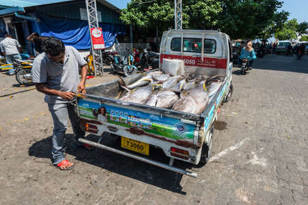 Male, Maldives - November 21, 2017: Area of fresh fish market in Male, Maldives. Huge freshly caught tuna in the pickup truck. Stock Photo - 133366725