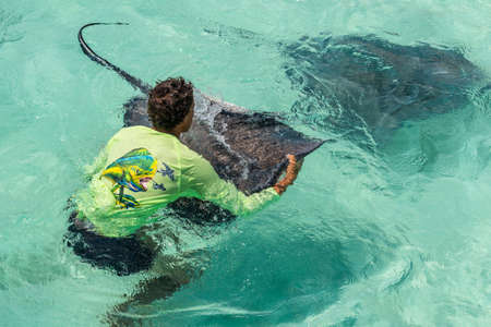 George Town, Grand Cayman Islands, United Kingdom - April 23, 2019: Guide and Stingray at wild Stingray city on Gran Cayman, Cayman islands. Stigray city is famous snokerling spot visited on cruise. Editorial