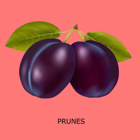 Plum on a red background. Vector illustration