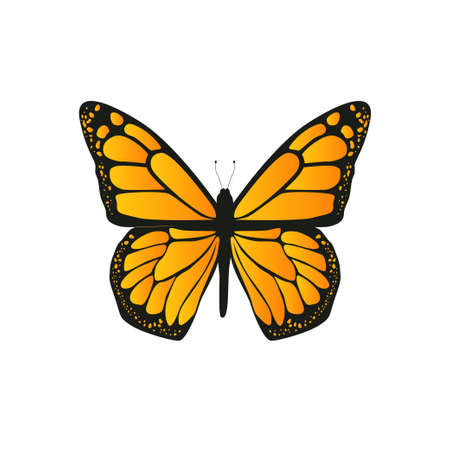 The butterfly with orange wings on white background. Vector illustration