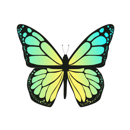 The butterfly with blue wings on a white background. Vector illustration