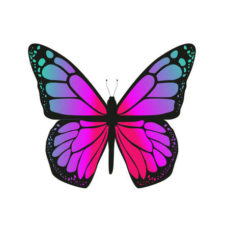 The butterfly with pink wings on a white background. Vector illustration