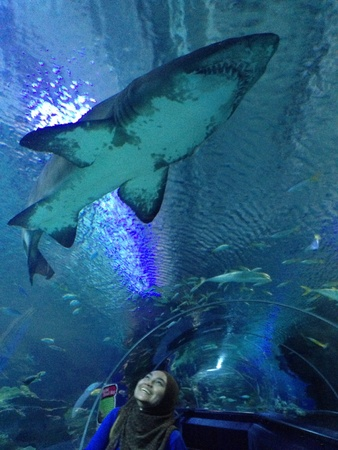 aquaria: Girl watching a shark swimming by in an aquarium