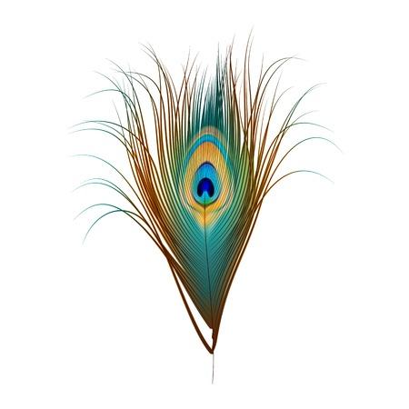 Pluma del pavo real aislado en blanco Ilustración de vector