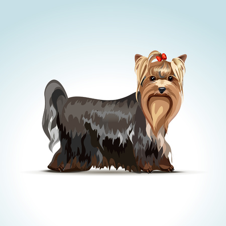 Yorkshire Terrier Dog Vector
