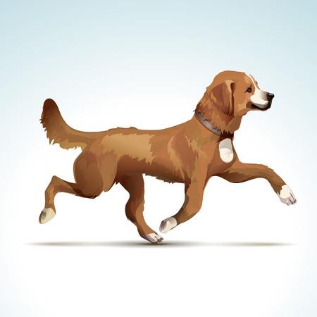 alpes suizos: Perro del labrador retriever