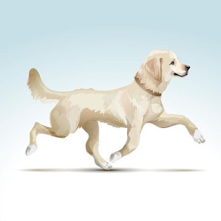 swiss alps: Labrador Retriever Dog