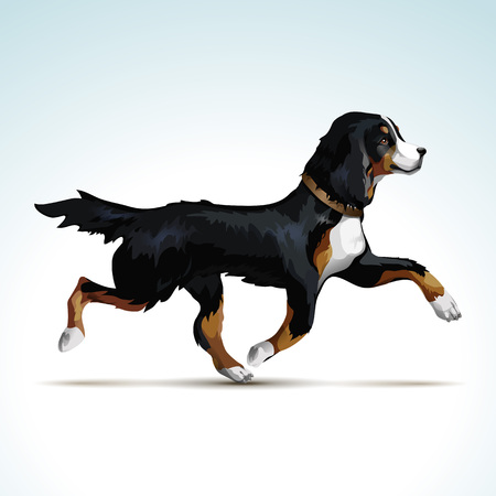 mountain dog: Labrador Retriever Dog
