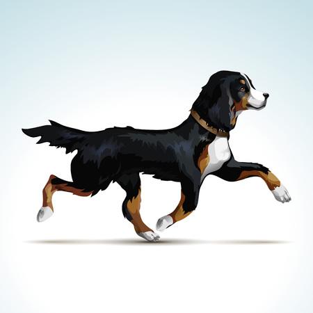 perro labrador: Perro del labrador retriever