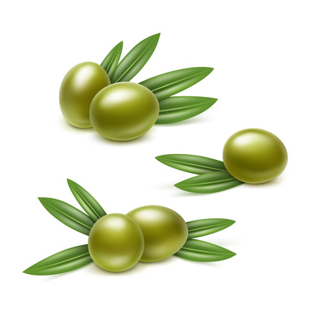 Illustration of Set of Green Olives Branches with Leaves Isolated on White Background Vettoriali