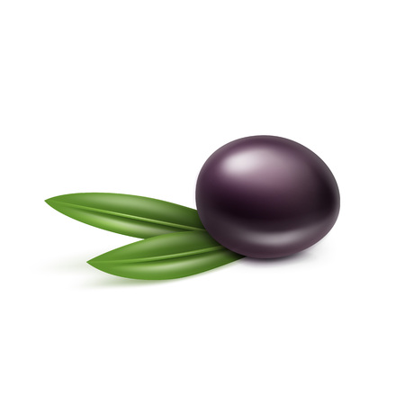europe closeup: Vector Black Olive with Leaves Isolated on White