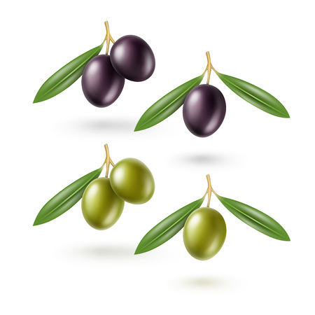spanish food: Vector Set of Black and Green Olives Branches with Leaves Isolated on White Background