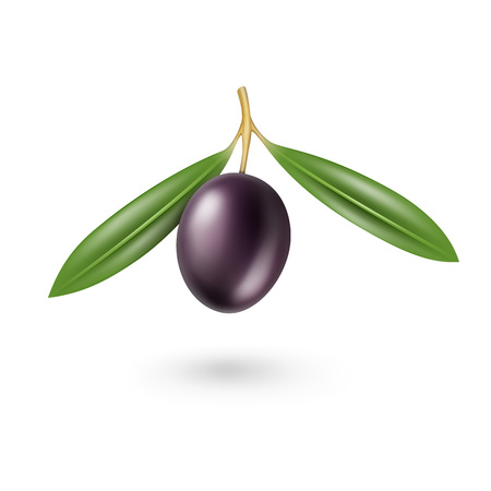 black olive: Vector Black Olive with Leaves Isolated on White Background