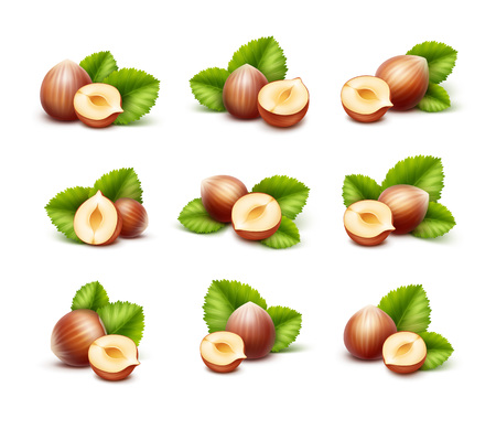 filberts: Vector Set of Full and Half Peeled Unpeeled Realistic Hazelnuts with Leaves Close up Isolated on White Background