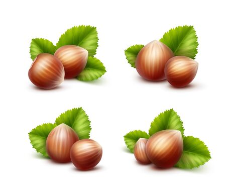 nutty: Vector Set of Full Unpeeled Realistic Hazelnuts with Leaves Close up Isolated on White Background Illustration