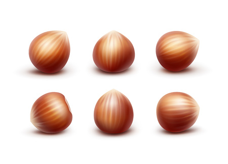 filberts: Vector Set of Full Unpeeled Realistic Hazelnuts Close up Isolated on White Background
