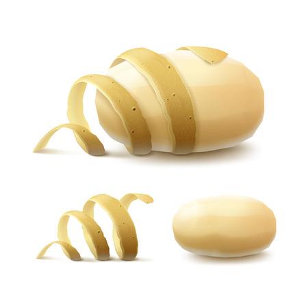 Vector Set of New Yellow Raw Whole Peeled Potato with twisted peel Close up Isolated on White Background Illustration