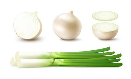 Vector set van verse gehele en Gesneden Witte Ui Bollen met groene uien close-up geïsoleerd op witte achtergrond Vector Illustratie