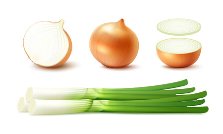 Vector Set of Fresh Whole and Sliced Yellow Onion Bulbs with Green Onions Close up Isolated on White Background Vectores