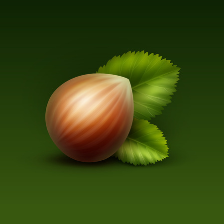 unpeeled: Vector Full Unpeeled Realistic Hazelnut with Leaves Close up Isolated on Green Background