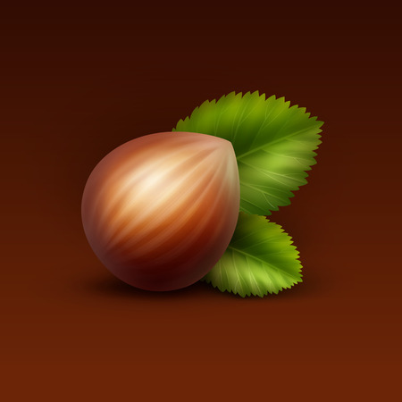 hazelnut: Vector Full Unpeeled Realistic Hazelnut with Leaves Close up Isolated on Brown Background