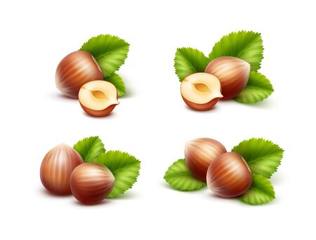 unpeeled: Vector Set of Full and Half Peeled Unpeeled Realistic Hazelnuts with Leaves Close up Isolated on White Background