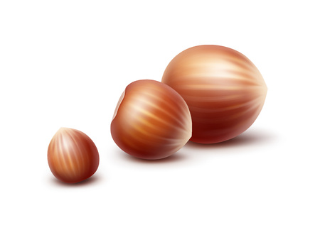 Vector Full Unpeeled Realistic Hazelnuts Close up Isolated on White Background
