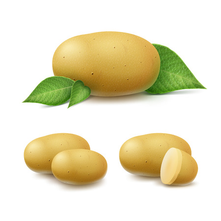 unpeeled: Set of New Yellow Raw Whole Unpeeled and Sliced Potatoes with leaves Close up Isolated on White Background Illustration