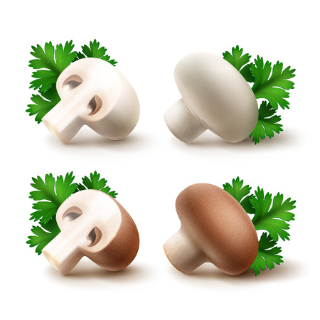 intact: Vector Set of Fresh Whole and Sliced Half White Brown Portabello Agaricus  Champignons Mushrooms with Green Parsley Leaves Close up Isolated on White Background