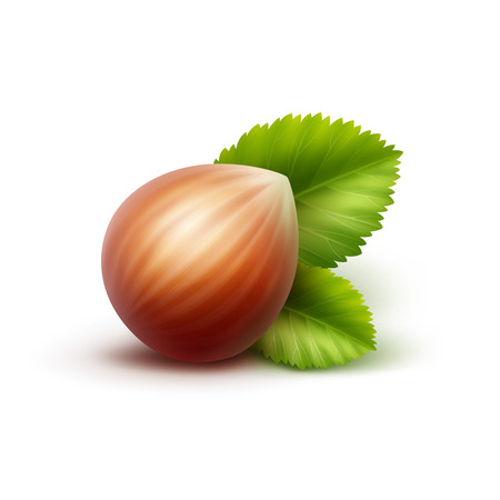 unpeeled: Vector Full Unpeeled Realistic Hazelnut with Leaves Close up Isolated on White Background