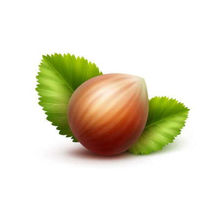 nutty: Vector Full Unpeeled Realistic Hazelnut with Leaves Close up Isolated on White Background