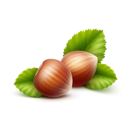 unpeeled: Vector Full Unpeeled Realistic Hazelnuts with Leaves Close up Isolated on White Background