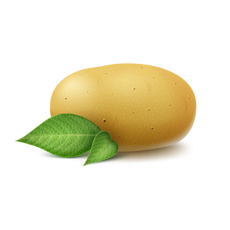 unpeeled: Vector New Yellow Raw Whole Unpeeled Potato with leaves Close up Isolated on White Background Illustration