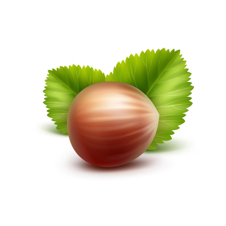 nutty: Full Unpeeled Realistic Hazelnut with Leaves Close up Isolated on White Background