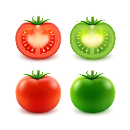 tomatoes: Vector Set of Big Ripe Red Green Fresh Cut Whole Tomatoes Close up Isolated on White Background Illustration