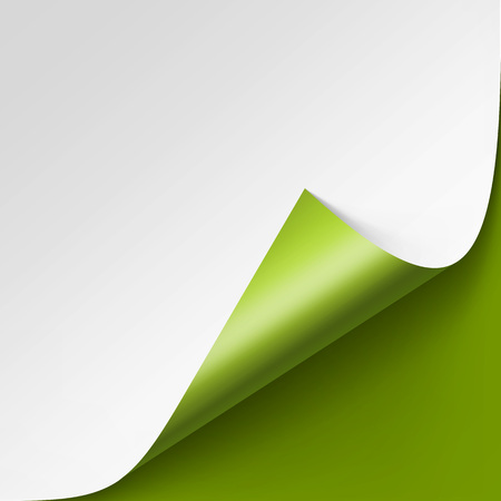 Vector Curled corner of White paper with shadow Mock up Close up Isolated on Green Background