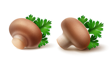 intact: Vector Set of Fresh Whole Brown Portabello Agaricus  Champignons Mushrooms with Green Parsley Leaves Close up Isolated on White Background