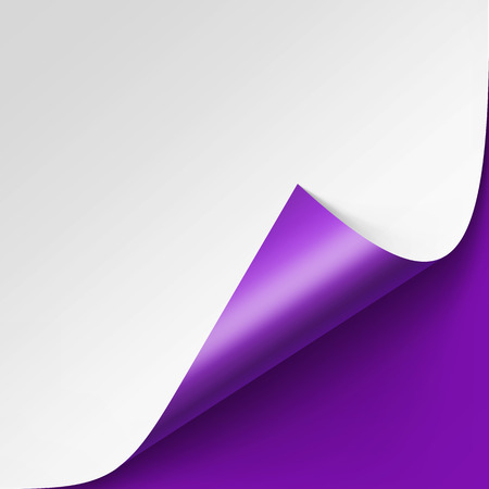 curled corner: Vector Curled corner of White paper with shadow Mock up Close up Isolated on Violet Purple Lilac Background