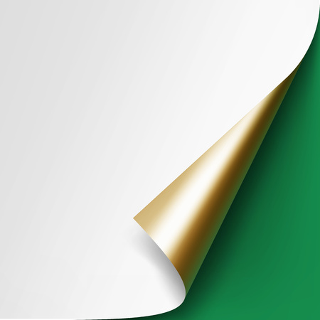 paper corner: Vector Curled Golden corner of White paper with shadow Mock up Close up Isolated on Green Background