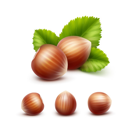 unpeeled: Vector Set of Full Unpeeled Realistic Hazelnuts with Leaves Close up Isolated on White Background Illustration