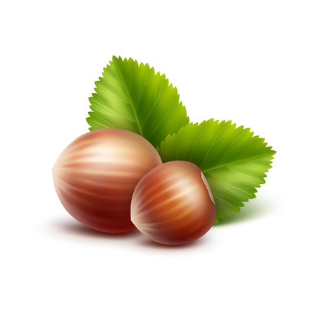 nutty: Vector Full Unpeeled Realistic Hazelnuts with Leaves Close up Isolated on White Background