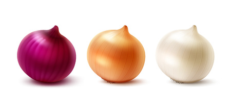 onion peel: Vector Set of Fresh Whole Yellow Red White Onion Bulbs Close up Isolated on White Background