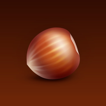 Vector Full Unpeeled Realistic Hazelnut Close up Isolated on Brown Background