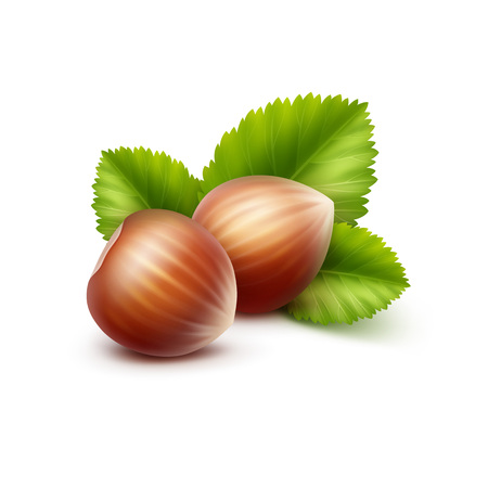 unpeeled: Full Unpeeled Realistic Hazelnuts with Leaves Close up Isolated on White Background