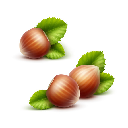 unpeeled: Vector Full Unpeeled Realistic Hazelnuts with Leaves Close up Isolated