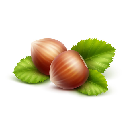 Vector Full Unpeeled Realistic Hazelnuts with Leaves Close up Isolated on Background