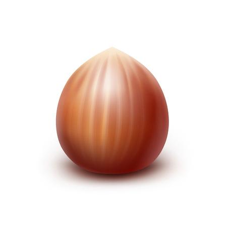 Vector Full Unpeeled Realistic Hazelnut Close up Isolated on White Background Illustration